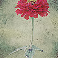 Remeber me Print by Angela Doelling AD DESIGN Photo and PhotoArt