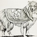 Reveille Print by Barbara Gilroy