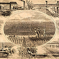 RICE PLANTATION, 1866 Poster by Granger