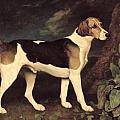 Ringwood Poster by George Stubbs
