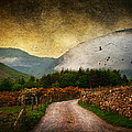 Road by the Lake Poster by Svetlana Sewell