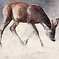 Roe Buck - Winter Print by Mark Adlington