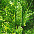 Romaine Unfurling Print by Steve Asbell