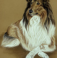 Rough Collie Poster by Patricia Ivy