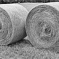 Round Hay Bales Black and White  Print by James BO  Insogna