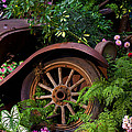 Rusty truck in the garden Print by Garry Gay