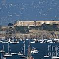 Sailboats In The San Francisco Bay Overlooking Alcatraz . 7D8080 Poster by Wingsdomain Art and Photography