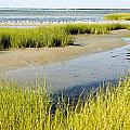 Salt Marsh Habitat With Flock Of Birds Poster by Tim Laman