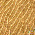 Sand ripples abstract Print by Elena Elisseeva