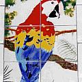 Scarlet Macaw Poster by Dy Witt