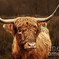 Scottish Moo Coo - Scottish Highland cattle Print by Christine Till