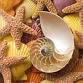 Sea shells and starfish Print by Garry Gay