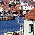 Seagull At Whitby Harbor Poster by Axiom Photographic