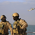 Seals Aboard A Rigid-hull Inflatable Poster by Stocktrek Images