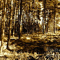 sepia forest Print by Jessica Hubner
