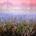 September Cornfield Print by Bill Cannon