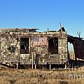 Shack with American flag Poster by John Greim