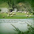 Sheep Grazing Scripture Print by Cindy Wright