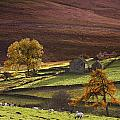 Sheep On A Hill, North Yorkshire Print by John Short