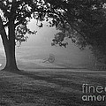 Shiloh in the fog Print by David Bearden