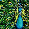 Shimmering Feathers of a Peacock Print by Elizabeth Robinette Tyndall