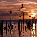 Silhouette Of Seagulls On Posts In Sea Poster by Axiom Photographic