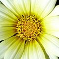 Simply Daisy Print by JoAnn SkyWatcher