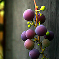 Simply Grapes Poster by Paul St George