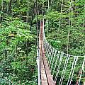 Sky Bridge 2 Poster by Aimee L Maher Photography and Art