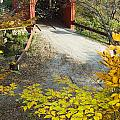 Slaughter House Bridge And Fall Colors Print by James Forte