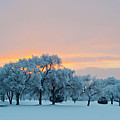 Snow Covered Trees At Sunset Print by Nancy Newell