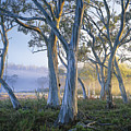 Snowgums At Navarre Plains, South Of Lake St Clair. Print by Rob Blakers