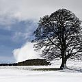 Snowy Field And Tree Poster by John Short