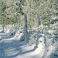 Snowy Footpath in Winter Wonderland Print by Heiko Koehrer-Wagner
