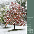 Snowy Maple with Buddha Quote Poster by Heidi Hermes
