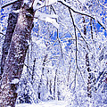 Snowy Path Poster by Rob Travis