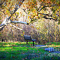 Solitude under the Sycamore Print by Carol Groenen
