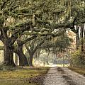 Southern Drive Live Oaks and Spanish Moss Poster by Dustin K Ryan
