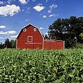 Soybean Field And Red Barn Near Anola Poster by Dave Reede