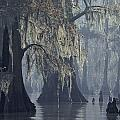 Spanish Moss Drapes Old Cypress Trees Print by John Eastcott And Yva Momatiuk