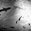 Squales Fish by xamah image