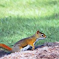 Squirrel in the Park Print by Jeff Kolker