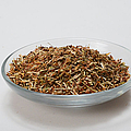 St Johns Wort Dried Herb Print by Photo Researchers, Inc.