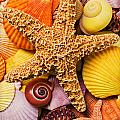 Starfish and seashells  Print by Garry Gay