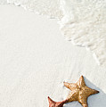 Starfish On Tropical Beach Print by Mehmed Zelkovic