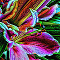 Stargazer Lilies Up Close and Personal Print by Bill Tiepelman
