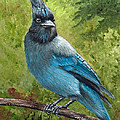 Stellar Jay Poster by Dee Carpenter