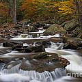 Stream At Ricketts Glen Print by Robert Wirth