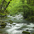 Stream in the Smokies Poster by Andrew Soundarajan