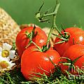 Summer tomatoes Poster by Sandra Cunningham